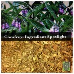 Comfrey Ingredient Spotlight