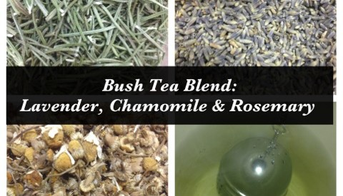 Lavender Chamomile Rosemary Bush Tea