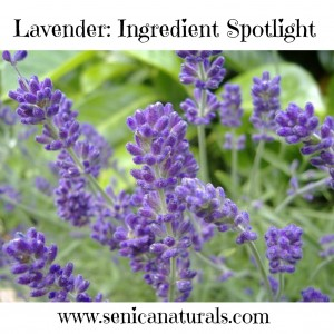 Lavender Ingredient Spotlight