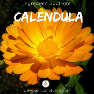 Calendula Ingredient Spotlight Square