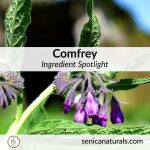 Comfrey Ingredient Spotlight square