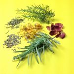 Hair Tea Herbs Collage