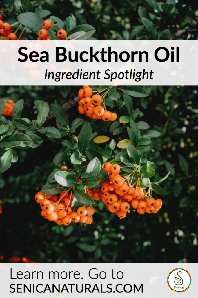 Sea Buckthorn Berry Oil rich in antioxidants and moisturizing properties